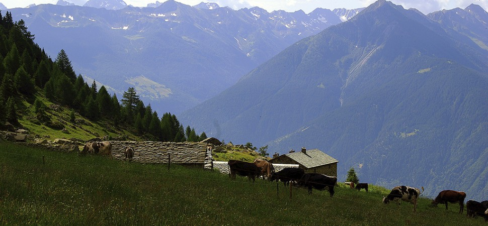 Alpe Caldenno